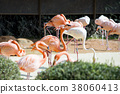 Animals in a zoo. various wild animals photo. 025 38060413