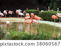 Animals in a zoo. various wild animals photo. 175 38060567