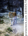 Animals in a zoo. various wild animals photo. 102 38060579