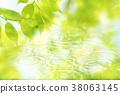 自然 樹葉 葉子 38063145