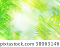 自然 樹葉 葉子 38063146