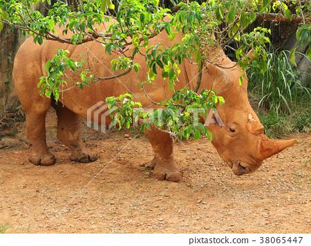 躲在樹影後的犀牛 38065447