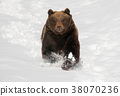 bear, animal, grizzly 38070236