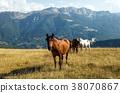 horses, field, meadow 38070867