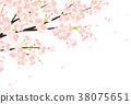 벚꽃 38075651