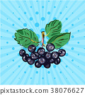 Hanging bundle of chokeberry on a blue background 38076627