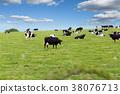 牛 農場 牧場 38076713