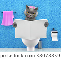 Cat sitting on a toilet seat reading magazine  38078859