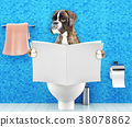 Boxer dog sitting on a toilet seat  38078862