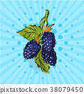 blackberry, illustration, berry 38079450