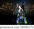Puppy of french bulldog on black background 38080173