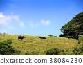 奶牛 牲口 牛 38084230