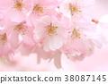 봄 낭만 38087145