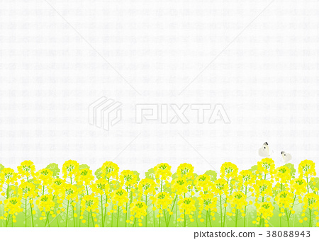 Background material _ rape blossoms and butterfly (white) 38088943