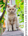 Cat , lovely animal and pet in the garden 38093120