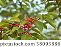 열매, 과실, 레드 38093886