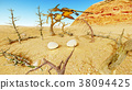 Egg and pterodactyl 3d rendering 38094425