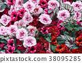 五顏六色和華美的花背景 38095285