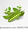 Vector green peas. Photo-realistic vector pods of 38095749