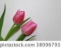 鬱金香 花朵 花 38096793