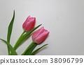 鬱金香 花朵 花 38096799