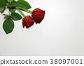 玫瑰 玫瑰花 花朵 38097001