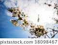 Apricot flowers on a branch in bloom 38098467