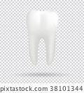 White molar tooth 38101344