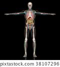 解剖學 肉 人體 38107296
