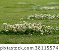 white clover, lawn, fresh verdure 38115574