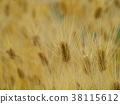 barley, wheat, grain 38115612