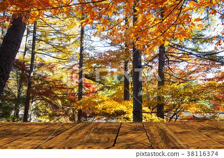 Beautiful maple season at Kumoba Pond, Karuizawa 38116374