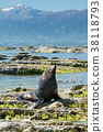 Cute seal sitting on the rock at Kaikoura 38118793