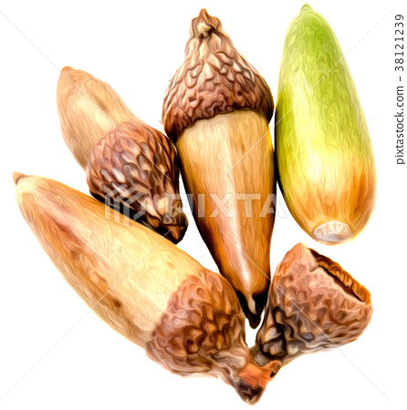 Four acorns and hat isolated 38121239