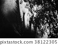 树荫树阴影树阴影植物艺术艺术摄影阳光黑白单色照片黑白照片 38122305