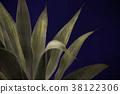 仙人掌多肉植物室内植物艺术艺术摄影植物简单的室内时尚内部 38122306