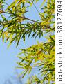 청명한 하늘과 대나무 잎 38127694