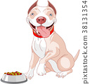 Hungry Pit-bull 38131354