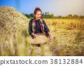 farmer woman threshed rice in field 38132884