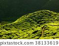 Texture of green tea farm 38133619