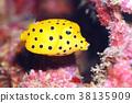Minami Hako Hugo Huge Fish 38135909