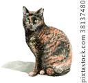 수채화로 그린 녹 무늬의 고양이 38137480
