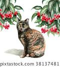 Manryo and Sabi cat painted in watercolor 38137481