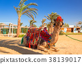 camel, egypt, beach 38139017
