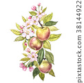 Colorful watercolor of the apple tree branches 38144922