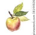 Watercolor hand drawn apple. Eco natural food 38144926
