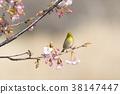 花朵 花 花卉 38147447