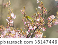 花朵 花 花卉 38147449