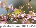 花朵 花 花卉 38147450