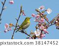 花朵 花 花卉 38147452